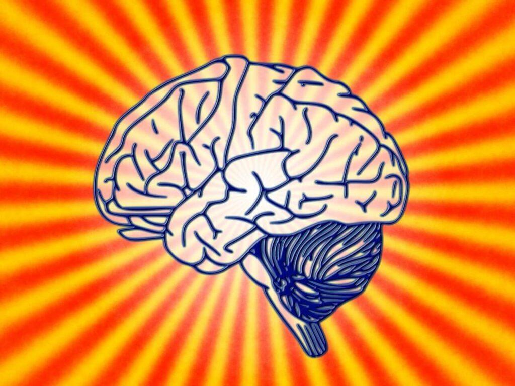 agyi plaszticitás